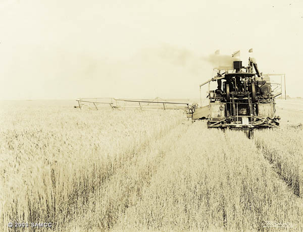 Harvesting wheat on Natomas land