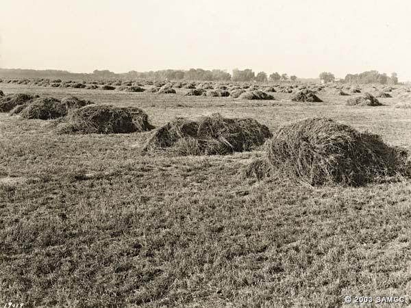 Fourth cutting of hay field