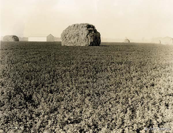 Alfalfa hay and warehouse