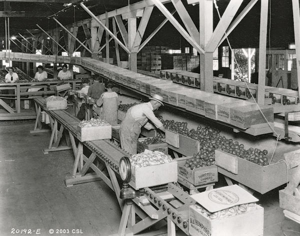 [Humphery fruit packing house, 2 views]