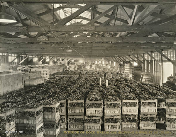 Interior of dock warehouse showing shipment of celery