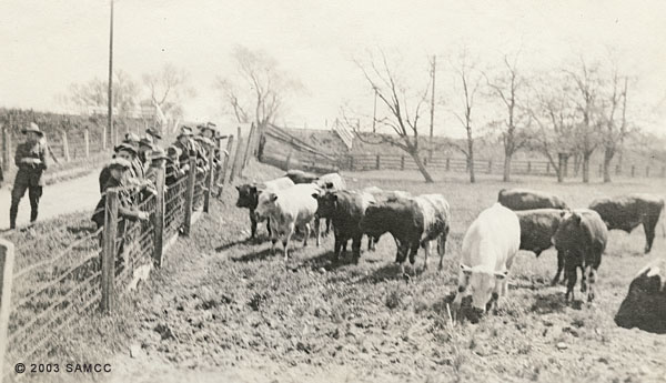 Students inspecting a herd of Shorthorn bulls