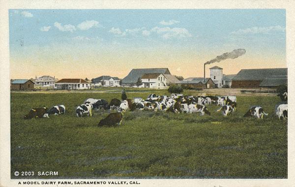 [A Model Dairy Farm]