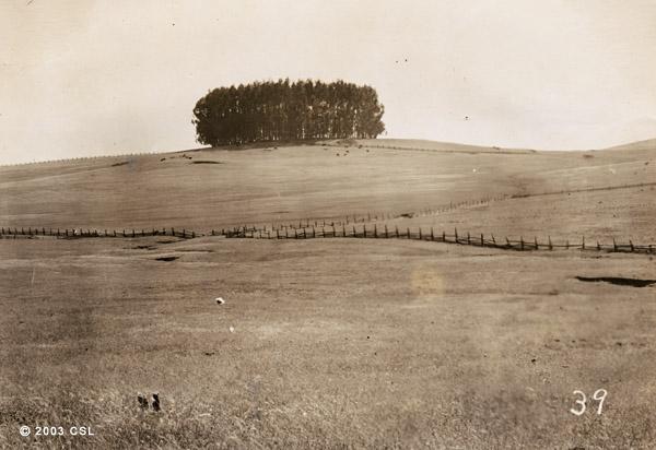 [Eucalyptus grove]