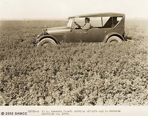F. L. Azevedo Fourth cutting alfalfa hay : photographic print